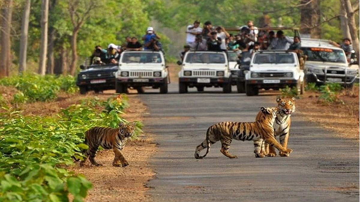 Rajaji National Park- नाम तो सुना होगा, यहाँ  जानें और भी बहुत कुछ
