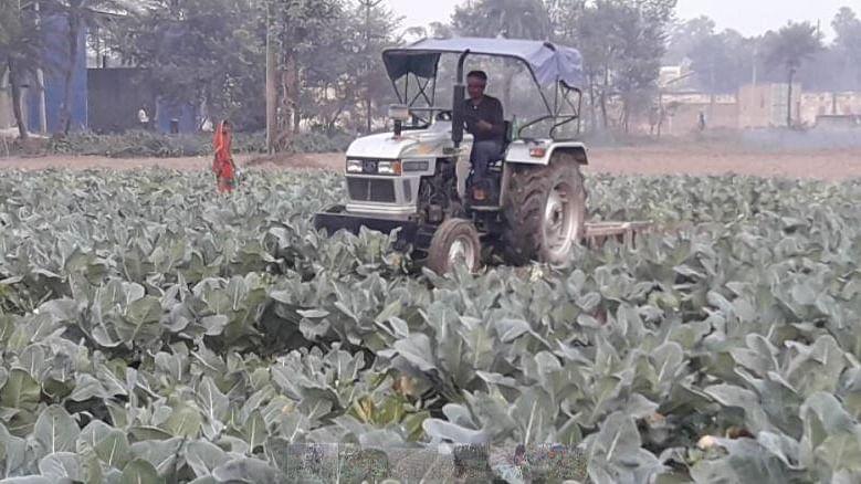 एक रुपये किलो भी नहीं बिक रही थी गोभी, मजबूरन किसान ने लहलहाती फसल पर चला दिया ट्रैक्टर