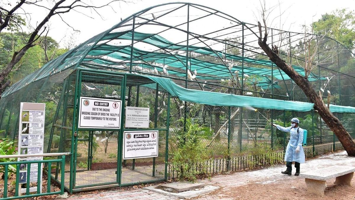 लखनऊ के चिड़ियाघर में भी बर्ड फ्लू का खौफ, पक्षीबाड़े किए गए बंद