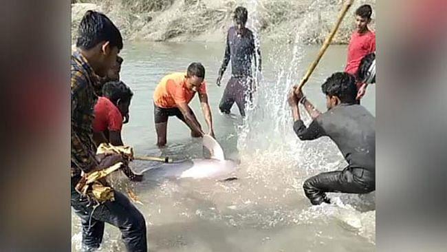 उत्तर प्रदेश: कुल्हाड़ी और डंडों से पीट-पीटकर डॉल्फिन को उतारा मौत के घाट, 3 लोग भेजे गए जेल, देखें Video