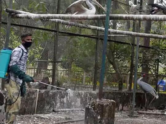 Bird Flu: दिल्ली में बर्ड फ्लू की आशंका, मयूर विहार के सेंट्रल पार्क में मृत मिले 100 से अधिक कौवे