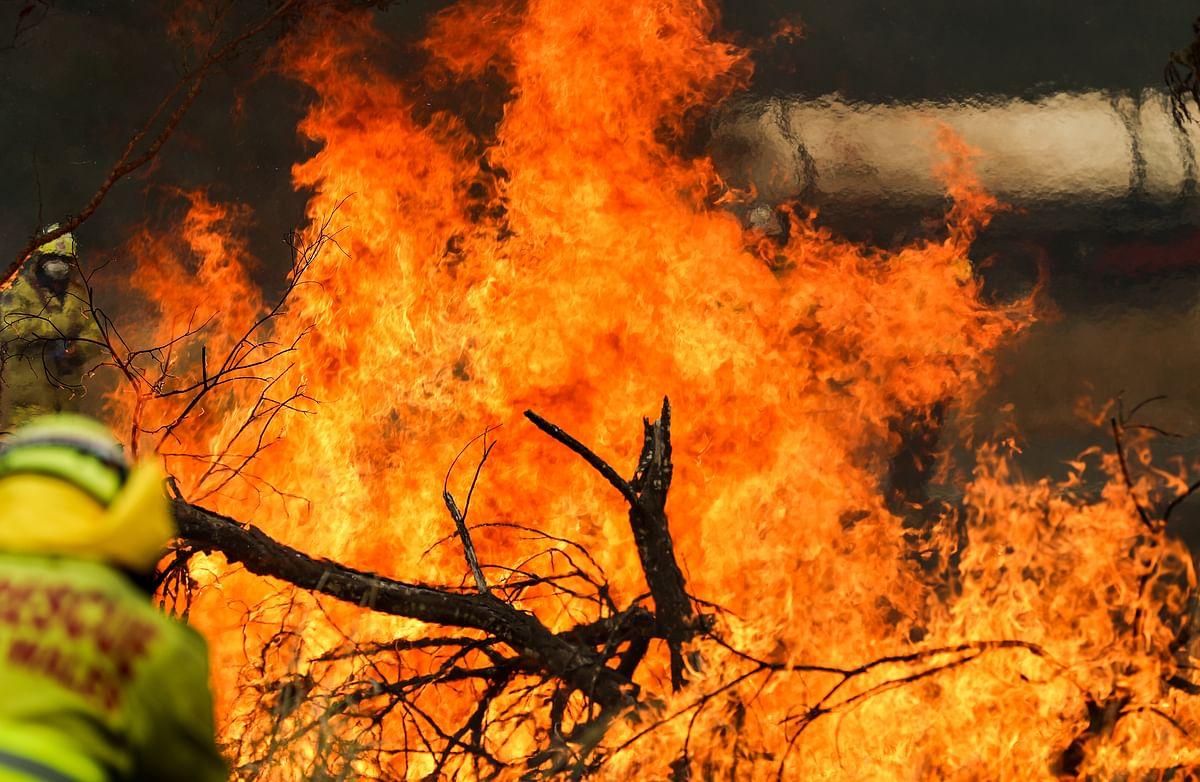 दक्षिण ऑस्ट्रेलिया के जंगल में लगी आग से संकटग्रस्त जीव पर खतरा