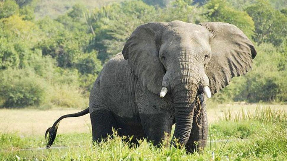 बिहार: नवादा में हाथी ने मचाया उत्पात, 2 लोगों को मौत के घाट उतारा
