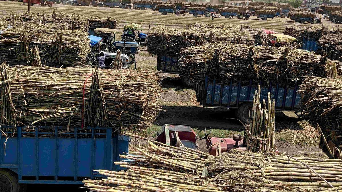 चीनी मिलों पर गन्ने के दाम का बकाया करीब 20,000 करोड़, यूपी में सबसे ज्यादा