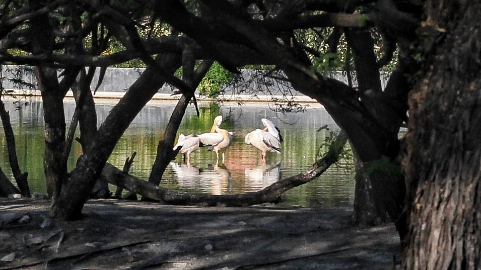 साल भर में बदला चिड़ियाघर, जानवरों की प्रजतियों में भी हुई बढ़ोतरी