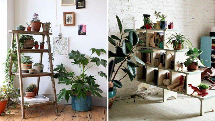 Vastu Tips: घर में इस पौधे को लगाने से आती है माँ लक्ष्मी की विशेष कृपा, जीवन की ढेरों परेशनियाँ होंगी दूर