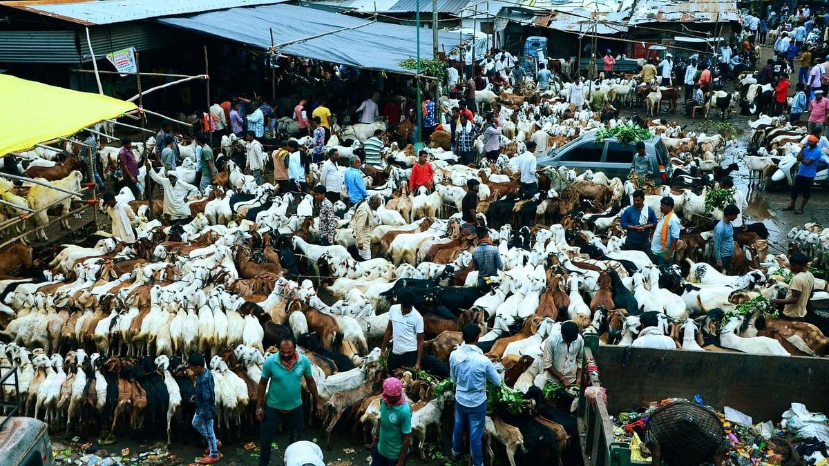 बिहार में बकरीद को लेकर ऑनलाइन हो रही बकरों की बिक्री