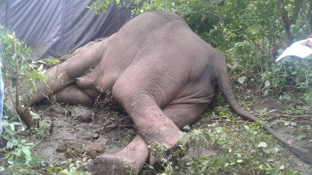 एंथ्रेक्स से जंगली हाथी की मौत के कारण हाई अलर्ट पर तमिलनाडु, केरल