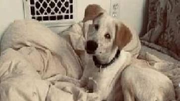 यूपी के झांसी में आवारा अंधे कुत्ते को अमेरिका में मिला घर