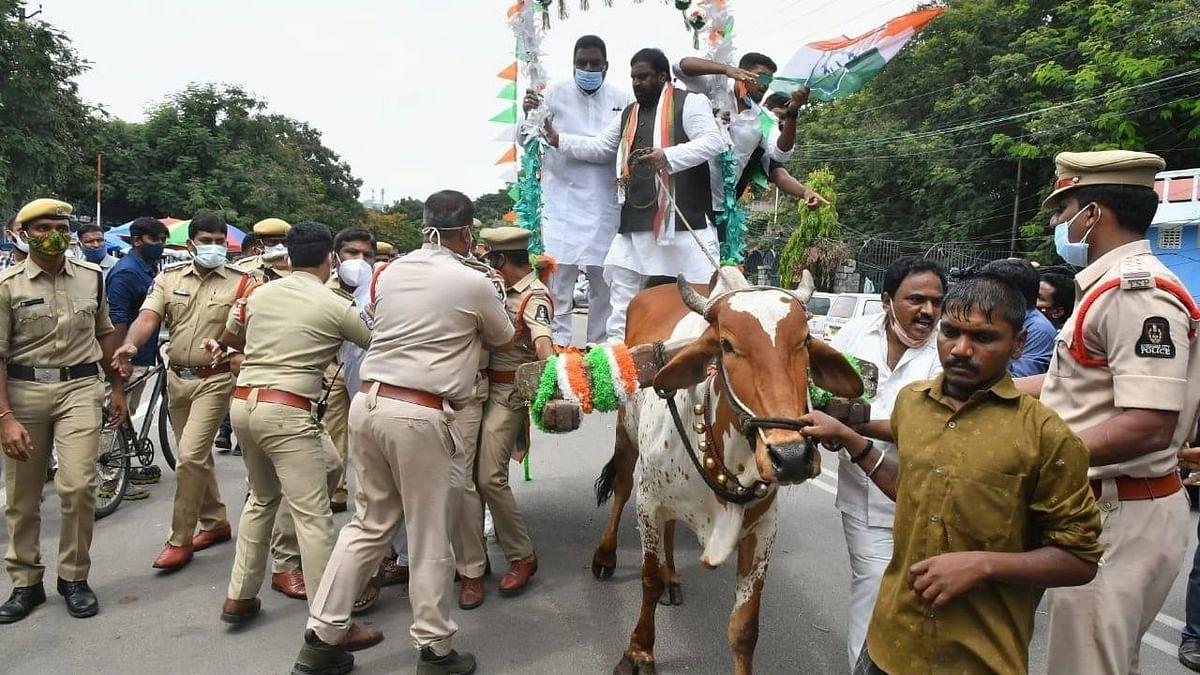 तेलंगाना कांग्रेस नेता विरोध के दौरान बैलगाड़ी से नीचे गिरे