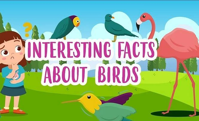GK : few interesting facts for kids about birds