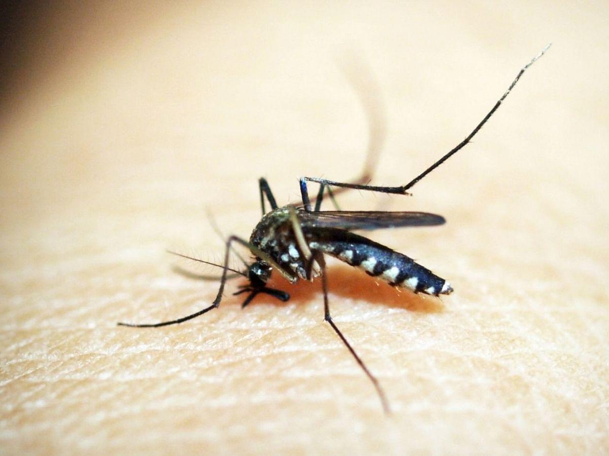 मध्य प्रदेश में कोरोना से राहत लेकिन डेंगू बनता जा रहा आफत