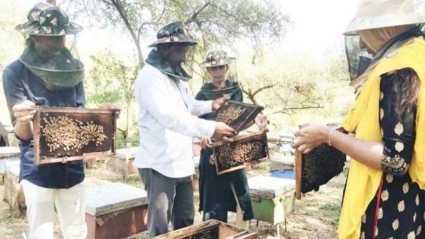 उद्यान एवं खाद्य प्रसंस्करण विभाग मधुमक्खी पालन हेतु इच्छुक किसानों के लिये आयोजित करेगा 90 दिवसीय प्रशिक्षण कार्यक्रम