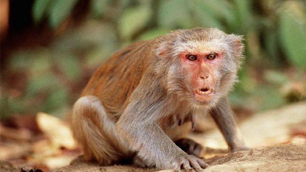 बंदर के हमले से बचने के लिए भाजपा नेता की पत्नी ने छत से छलांग लगाई, हुई मौत