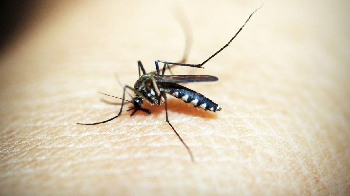 बिहार: पटना में 72 घंटे में डेंगू के 16 मामले सामने आए