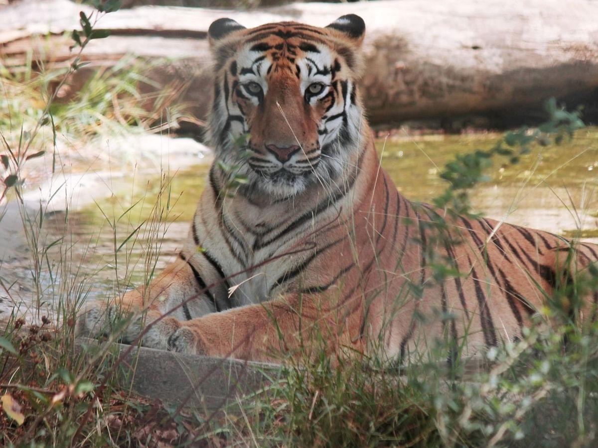 यूपी के अमानगढ़ रिजर्व का नाम बदलकर न्यू कॉर्बेट पार्क किया जाएगा