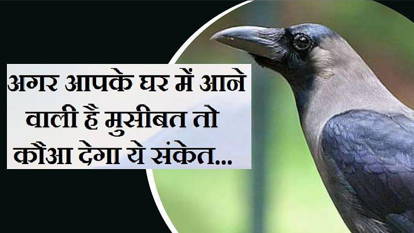 सिर्फ ज्योतिष ही नहीं बल्कि पशु पक्षी भी देते हैं भविष्य में होने वाली शुभ-अशुभ घटनाओं का संकेत, जाने कैसे..