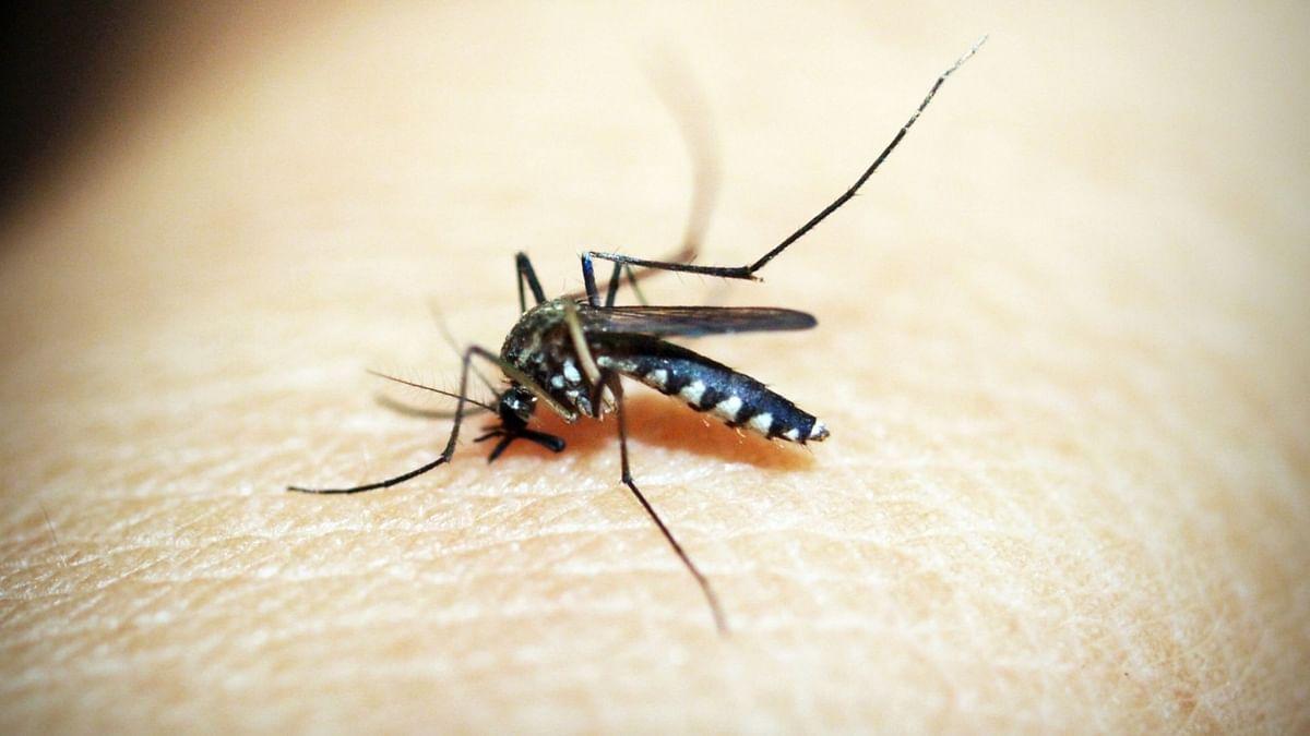 उत्तर प्रदेश की राजधानी लखनऊ में 24 घंटे में डेंगू के 11 मामले