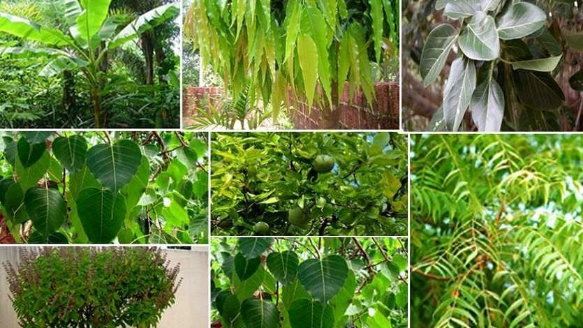 जानें किन पेड़ों पर होता है देवी-देवताओं का वास, किस पेड़ का पूजन करेंगे तो मिलेगी किस देवता की कृपा