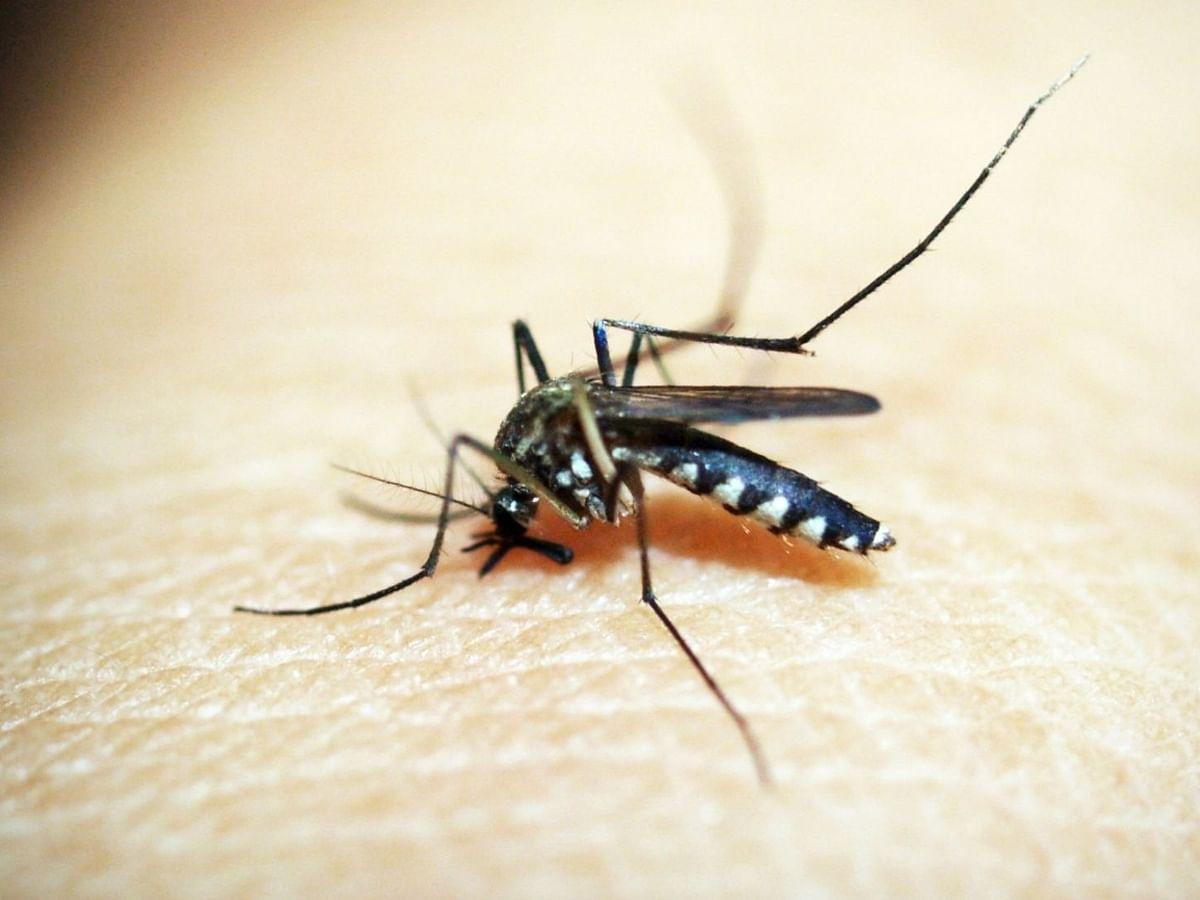 मध्य प्रदेश में कोरोना के बाद डेंगू से लड़ने में जुटी सरकार