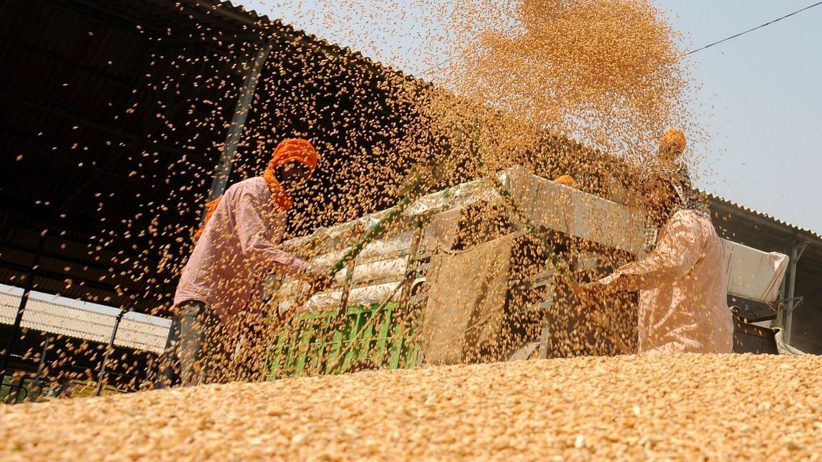 कैबिनेट ने सभी जरुरी रबी फसलों के लिए बढ़ाया न्यूनतम समर्थन मूल्य
