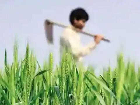 अन्य राज्यों से धान खरीद पर हरियाणा सरकार ने लगाई रोक, भड़के यूपी के किसान
